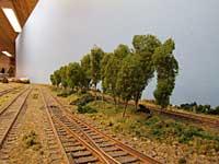 En rekke med trær mellom godsområde og smalspor