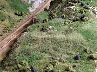 Nyplantet statisk grass